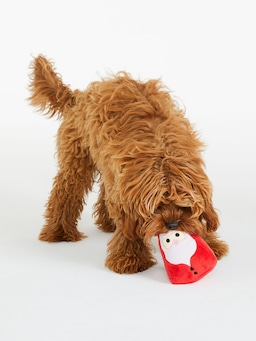 Santa Doggy Toy