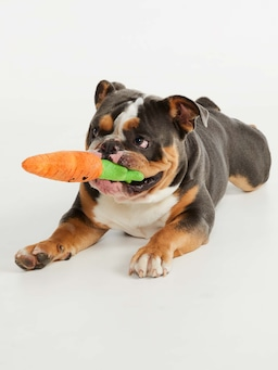 Carrot Doggy Plush Toy